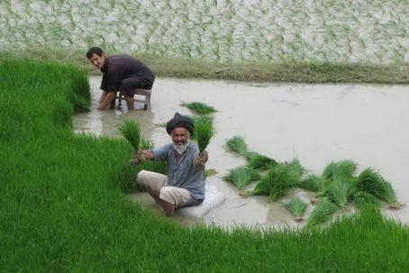 Mezőgazdaság- és vidékfejlesztés
